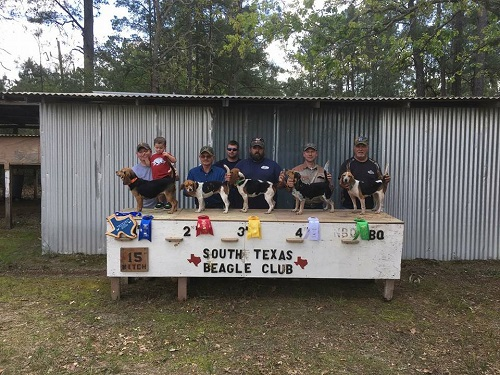 15 inch females Hardin County Beagle Club March 18 and 19