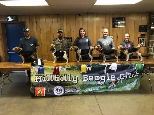 15 inch females hillbilly beagle club october 2017